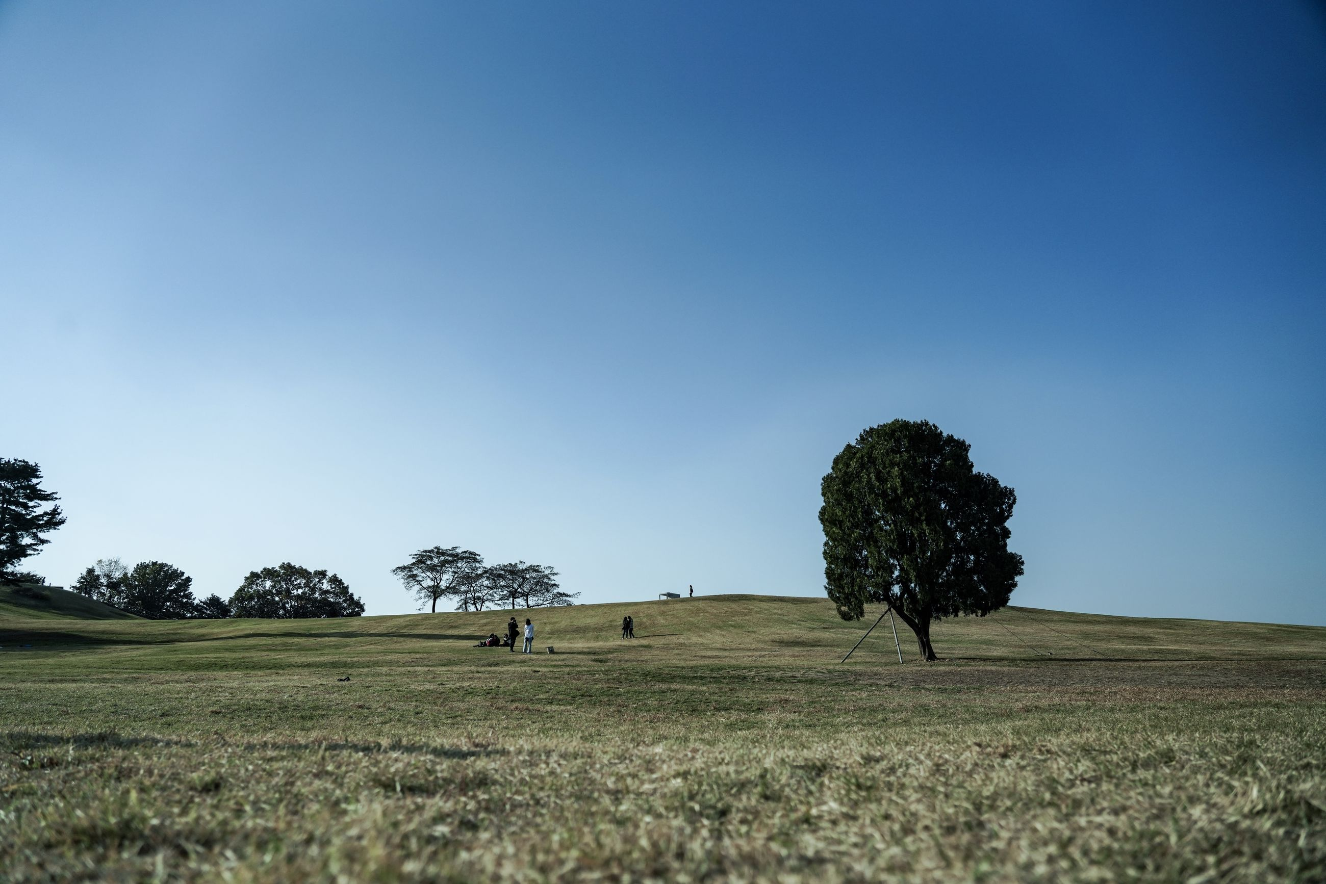plant, sky, field, land, environment, landscape, tranquility, grass, tranquil scene, tree, beauty in nature, scenics - nature, nature, blue, day, non-urban scene, clear sky, copy space, growth, no people, outdoors, isolated