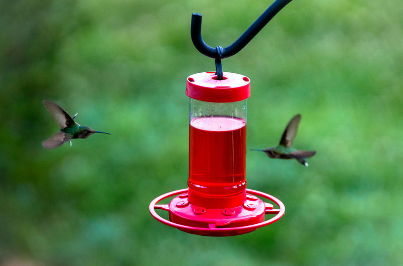 Hummingbirds flying by red bird feeder