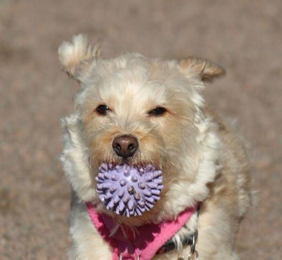 Dog Pets One Animal Domestic Animals Animal Themes Mammal Looking At Camera