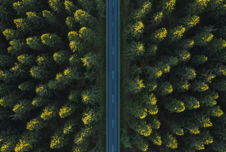 Forest Road Autumn Copy Space Drone  LINE Morning Moving Nature Path Pine Road Transportation Travel Tree View Aerial View Background Car Countryside Forest Germany Highway Landscape Light And Shadow Outdoor Pine Tree