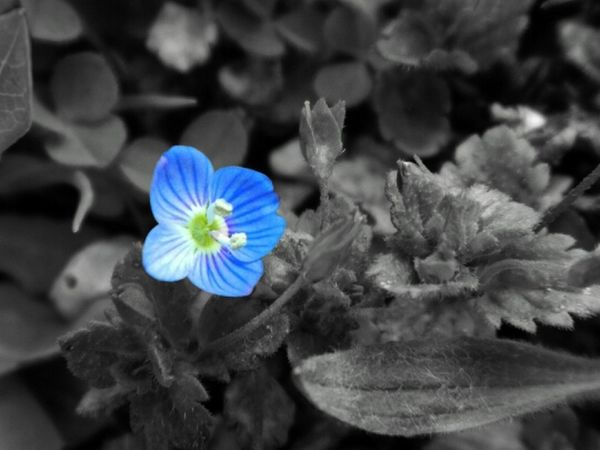 Flower Flower Head Nature Plant No People Close-up Blue Outdoors EyeEm Nature Lover EyeEm Gallery EyeEm Beauty In Nature EyeEm Flower