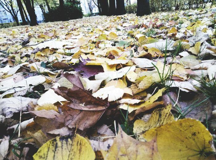 Leaf Nature Day