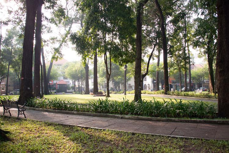 Morning Light Vietnam