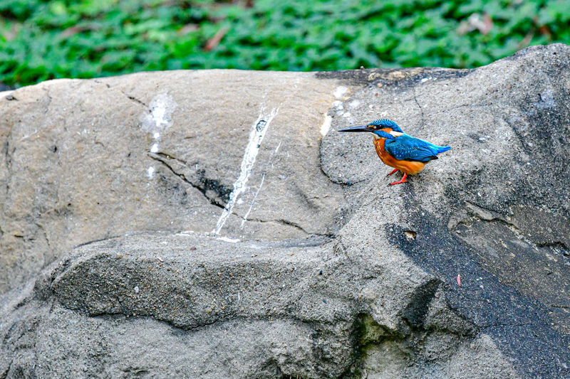 High angle view of bird perching on rock