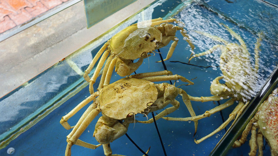 Crab Season! Seafood Animal Animal Body Part Animal Themes Animal Wildlife Animals In The Wild Close-up Crab Crab - Seafood Crustacean Day Indoors  Marine Nature No People One Animal Sea Sea Life Underwater Water Yellow