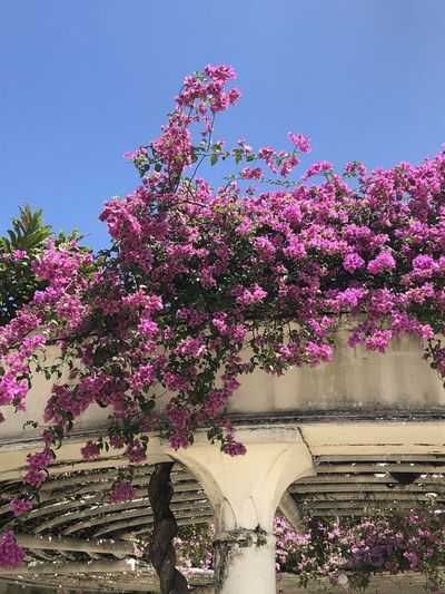 Pink flowering tree against purple sky