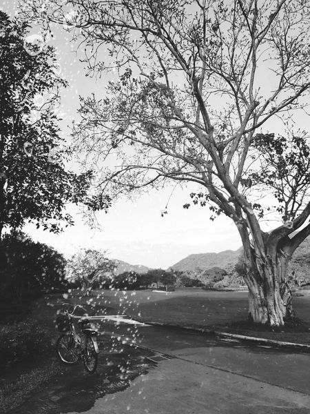 EyeEm Black&white! EyeEm Nature Lover Tree Nature Outdoors No People Beauty In Nature Sky Water Day Beauty In Nature Mountain Range Tranquility Palm Tree Black And White Collection  EyeEm BlackandWhite EyeEmNewHere EyeEm Best Shots Plant Mountain