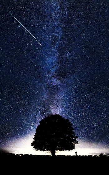 Tree Night Sky