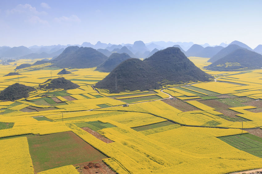 Rapeseed flowers of Luoping in Yunnan China ASIA Beauty In Nature Bees China Day Honey HoneyBee Landscape Luoping Minority Mountain Mountain Range Nature No People Rapeseed Rapeseed Blossom Rapeseed Field Scenics Sky Tradition Tranquil Scene Tranquility Yellow Yunnan Yunnan ,China