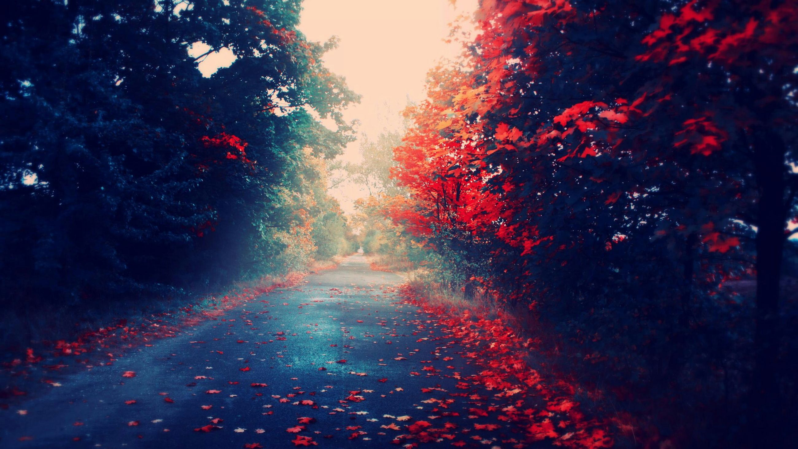 the way forward, tree, diminishing perspective, road, street, transportation, autumn, season, vanishing point, growth, nature, change, red, tranquility, beauty in nature, outdoors, wet, no people, leaf, branch