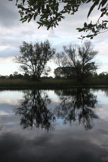 Oderradweg Reflecting River Beauty In Nature Branch Cloud - Sky Day Lake Nature No People Outdoors Reflection Scenics Sky Standing Water Tranquil Scene Tranquility Tree Water Waterfront Idyllic Woods Remote Non-urban Scene Stream Calm Countryside