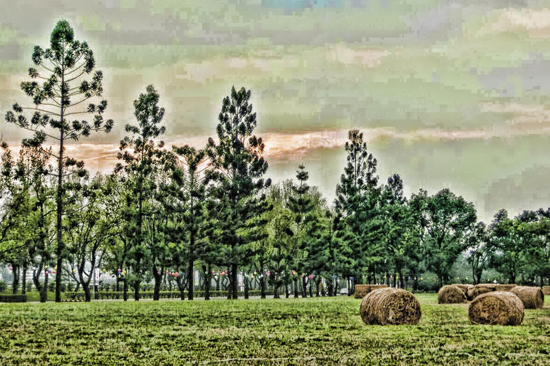 Agriculture Beauty In Nature Day Field Green Color Growth Landscape Lush - Description Nature No People Outdoors Rural Scene Scenics Sky Tranquil Scene Tranquility Tree