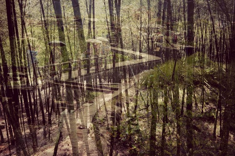 Back from a short vacation. Taiwan is a beautiful country.Yangming Mountain National Park Double Exposure Vacation Time Bamboo Forest