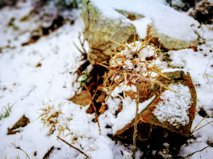 Winter Snow Nature Cold Temperature High Angle View Close-up No People Outdoors Day