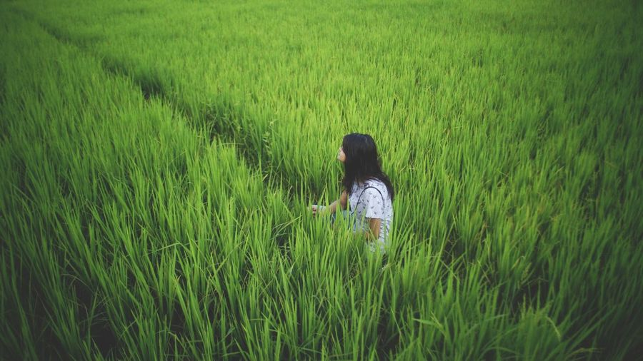 Rear View Of Woman Sitting On Rice Field