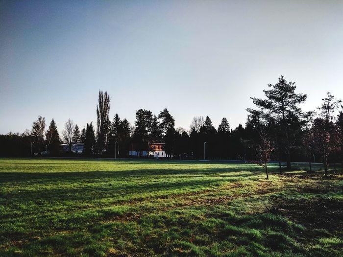 Tree Sport