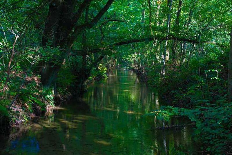 Showcase: February woods river