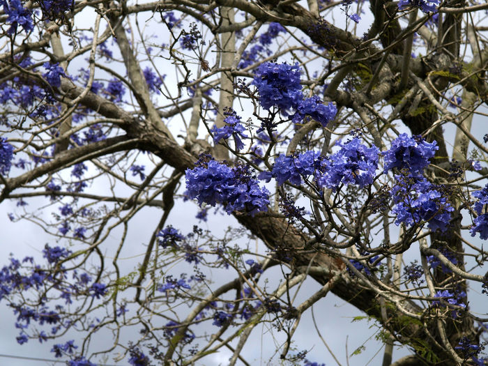 Low angle view of wisteria flowers blooming on tree
