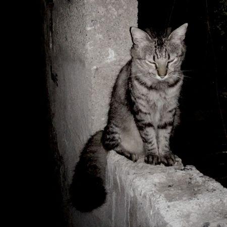 Cat Pelos Love❤ Boy