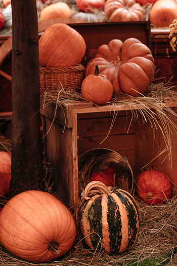 Orange pumpkins in a hay. farmer's market. autumn thanksgiving day background. halloween.
