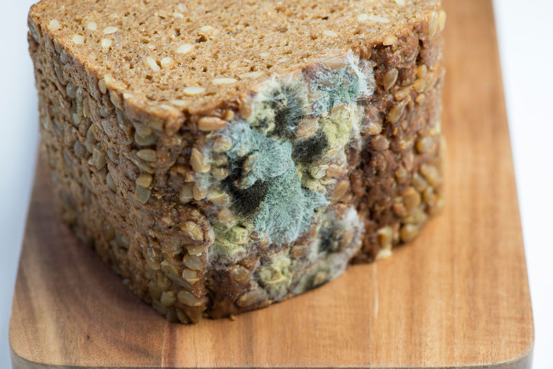Blue Mold on a whole grain bread Baked Goods Food And Drink Harmful Life Mold Bread Depraved Food Fungus Health Macro Meats Moldy Moldy Slice Of Bread Nasty Unfit Unhealthy