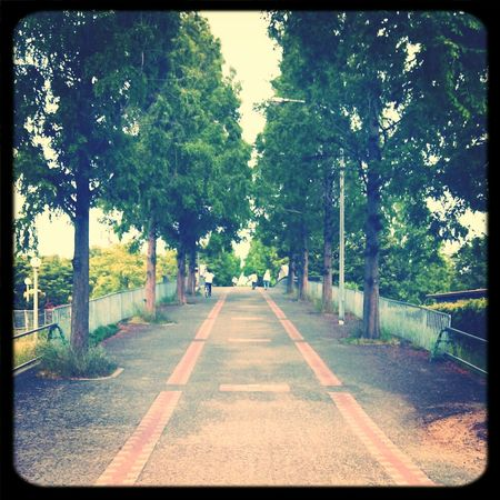 Running 100kマラソン挑戦 鶴見緑地公園 Shingo4549