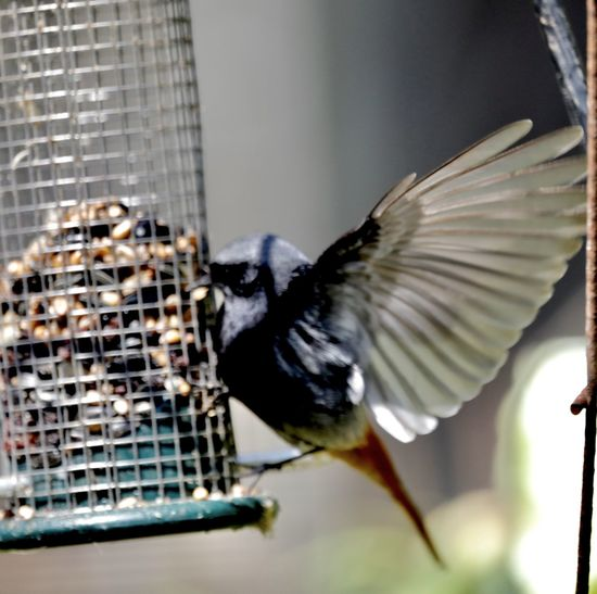 Close-up of bird flying
