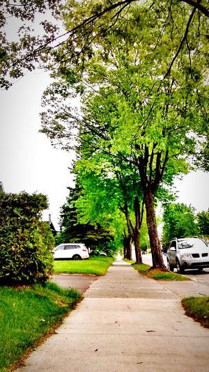 Nature Tree Street Outdoors Road Sky No People Nature Day Alone Walking First Eyeem Photo