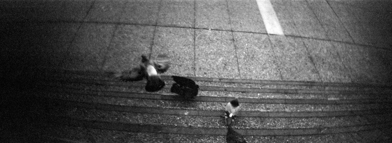 Pigeons Outdoors Sprocket Rocket Panorama Koduckgirl Adox Silvermax 100