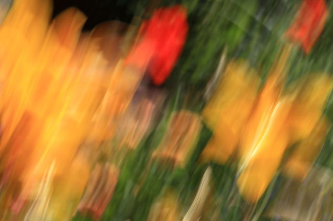 Painting with my camera ... Abstract Backgrounds Beauty In Nature Blurred Motion Close-up Colorful Defocused Eyem Best Shots Eyem Nature Lovers  Glowing Illuminated Impressionism Light Light Trail Motion Multi Colored No People Orange Color Painting With A Camera Painting With Light Selective Focus Tulips Wallpaper Pivotal Ideas