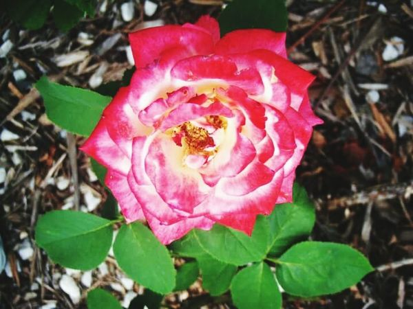 Spring Flowers Flowers From My Garden Roses Flower Porn EyeEm Nature Lover