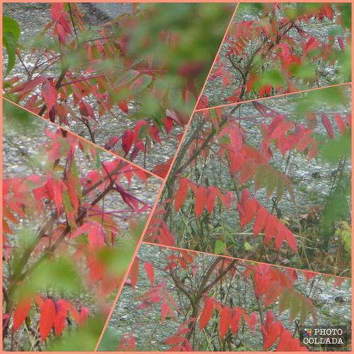 Autumn🍁🍁🍁 View Through The Window Enjoying The View Simple Beauty Naturelovers Enjoying Life Beauty In Nature HAVE A NICE SUNDAY  For My Eyeem Friends Change Tranquility Focus On Background RedLeaves Love Autumn Leaf 🍂 Awesome Autuum Colors Colors_ofourlives Rainy Days☔