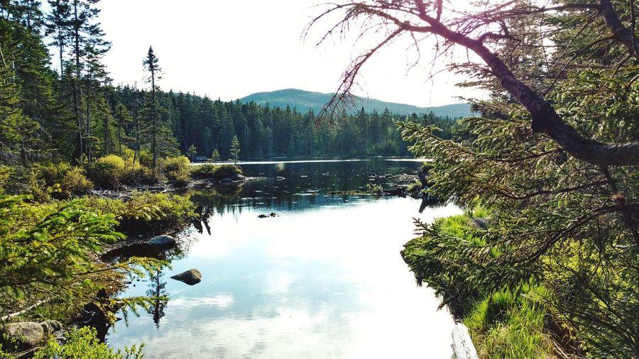 Le lac Démetane Tree Water Mountain Lake Branch Reflection Sky Calm Standing Water Lakeside