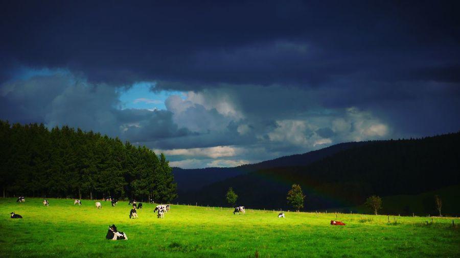 Grass Cloud -