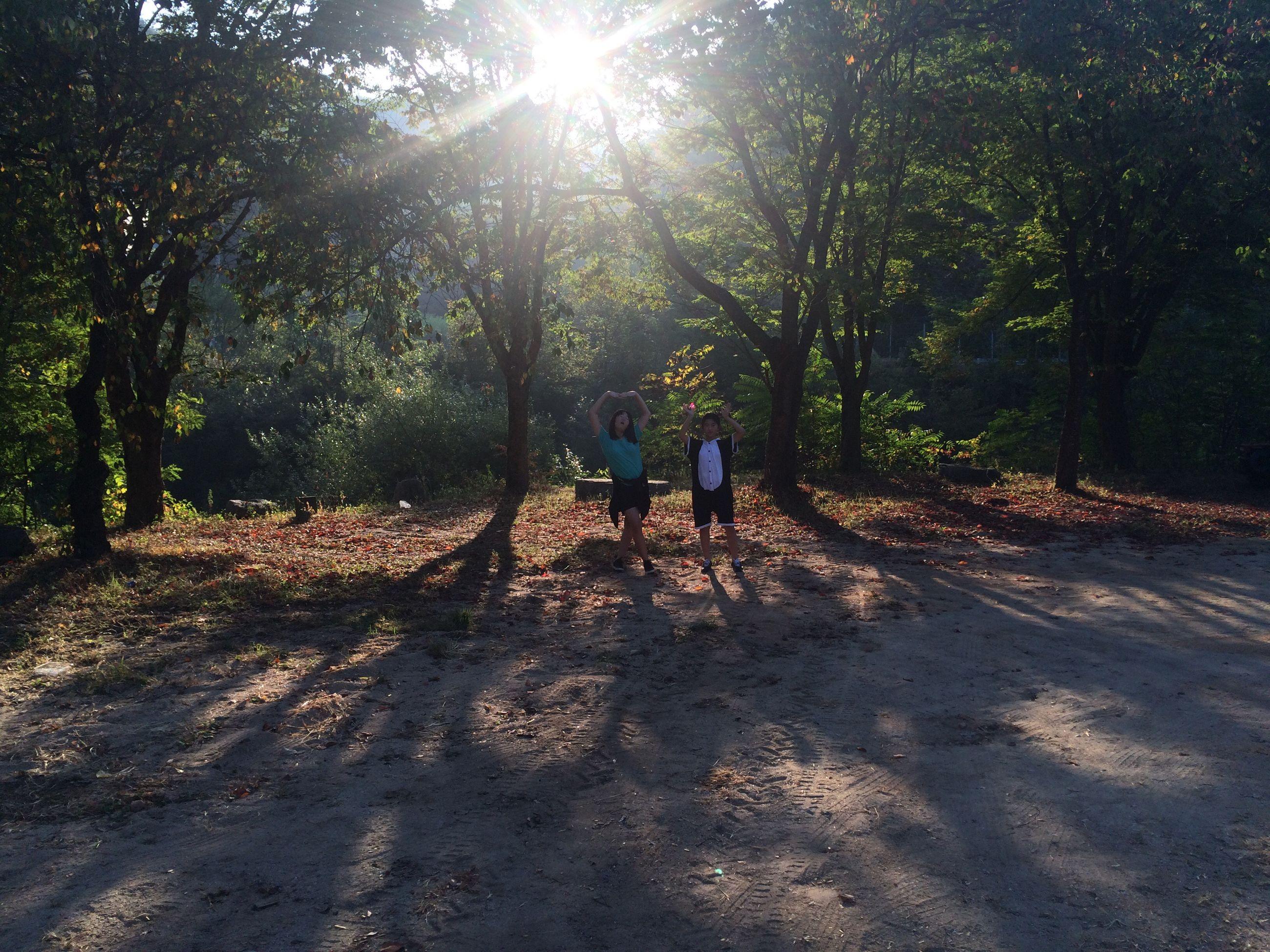 tree, sunlight, sun, sunbeam, lifestyles, leisure activity, full length, walking, lens flare, shadow, rear view, the way forward, sunny, men, dirt road, nature, day