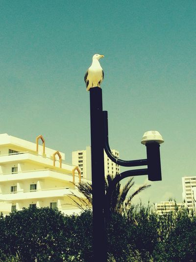 Summer Awesome Portugal Bird