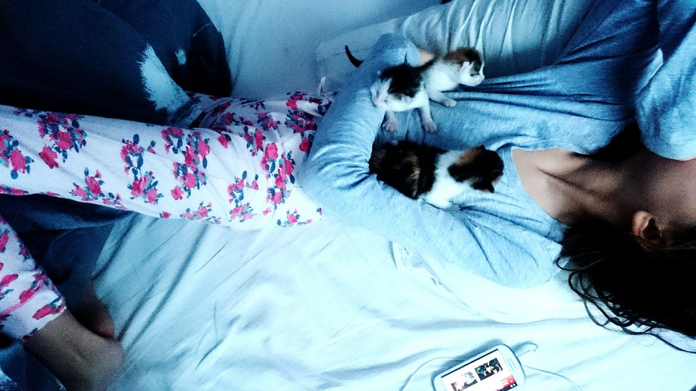 Youth Of Today Sleeping with my Mobilephone and Kittens Evening Bed Bedroom Blankets Peace And Quiet Kitty Cat Lovers Kitty Cat Kitty Love