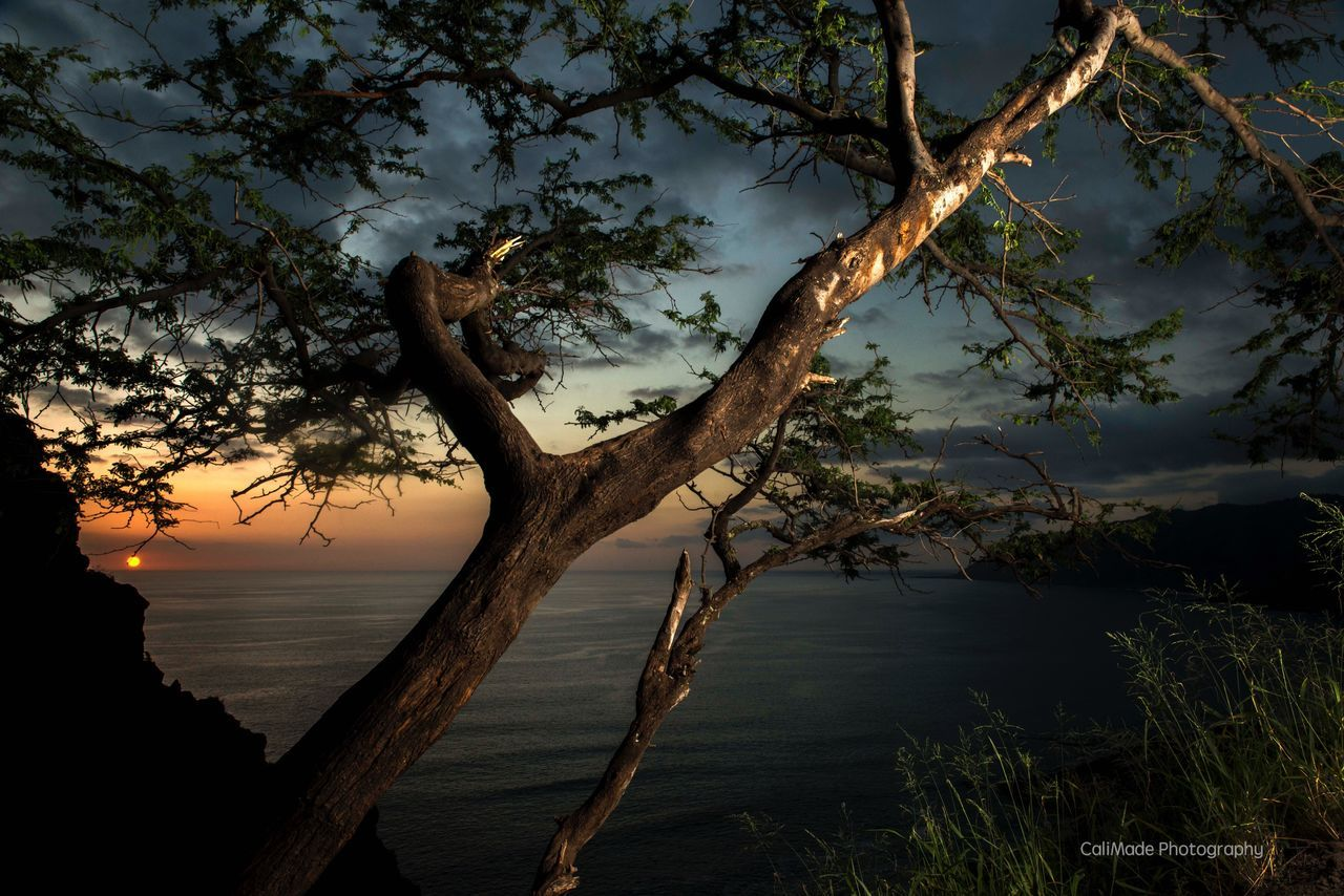tree, nature, beauty in nature, tranquility, scenics, no people, tree trunk, tranquil scene, outdoors, branch, sunset, growth, water, sky, sea, day