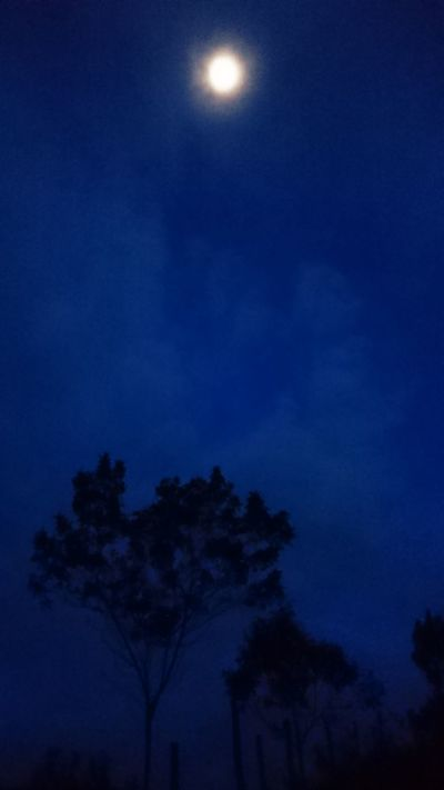 Nofilters Noedit Original Photo Full Moon Moon Silhouette Illuminated Tree Beauty In Nature Nigthphotography Pornmoon Blue Moonlight Sky
