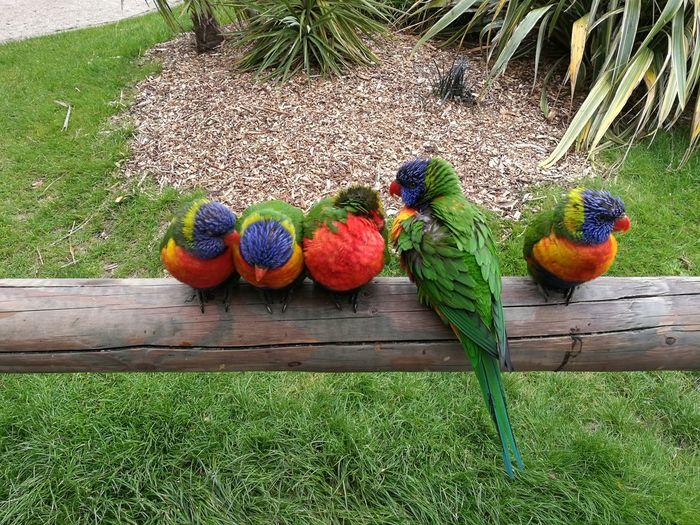 Zoo Birds🐦⛅ Rainbowlorikeet Coulorful Bird