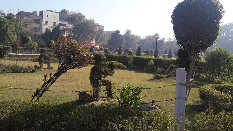 British Statue Made Of Grass Jaliyanwala Bagh Amritsar Amritsar Punjab Free Style Shades Of Winter EyeEmNewHere Tree Day No People Clear Sky Nature Outdoors Growth Plant Sunlight Tranquility Beauty In Nature Grass Sky