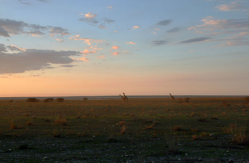 Africa Beauty In Nature Cloud - Sky Distant Etosha Giraffes Horizon Over Land Landscape Moody Sky Namibia Nature No People Non-urban Scene Outdoors Plain Rural Scene Scenics Sea Sky Sun Sunset Tourism Tranquil Scene Tranquility Vacations