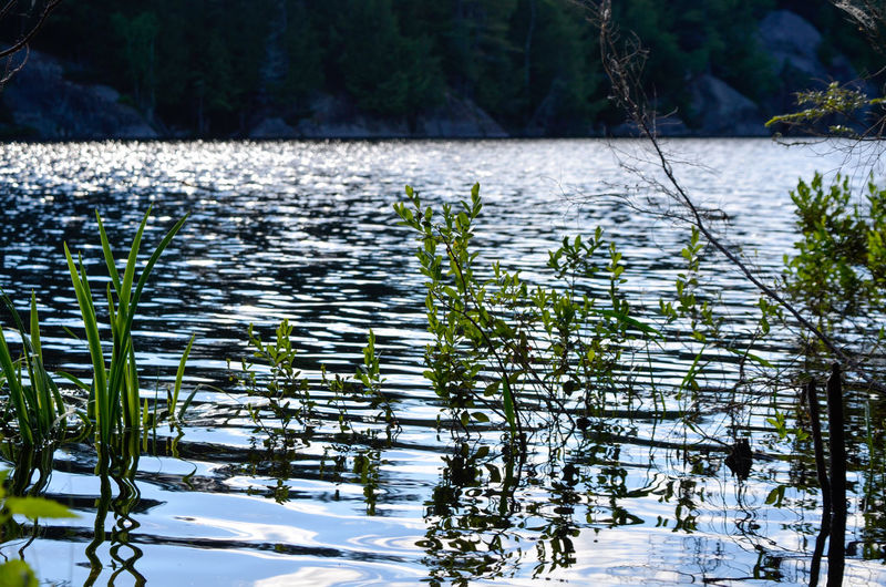 Tree Water Lake Reflection Forest Sky Plant Water Plant