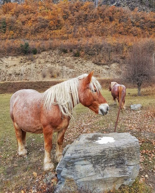 Barruera ... Lleida One Animal Animal Themes Horses Horse Photography  Horse Love Horselovers Horse Horse Riding Horse Photography  Horse Life Caballos 🐎🐎👢 Rural Scene Rural Scenes Rural Life Rural Exploration Barruera Lleida-Pirineus Valldeboi