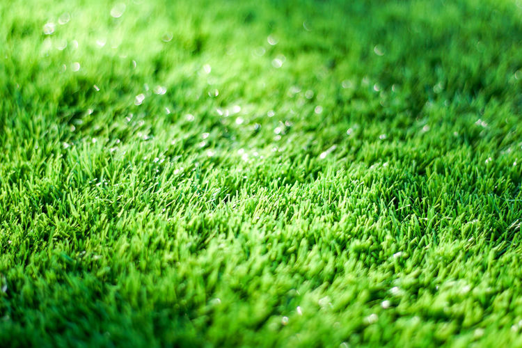 Day Field Grass Green Green Color Lawn Nature No People