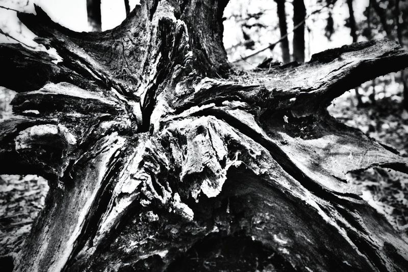 Black And White Photography Equivalence EyeEm Nature Lover Wood You?