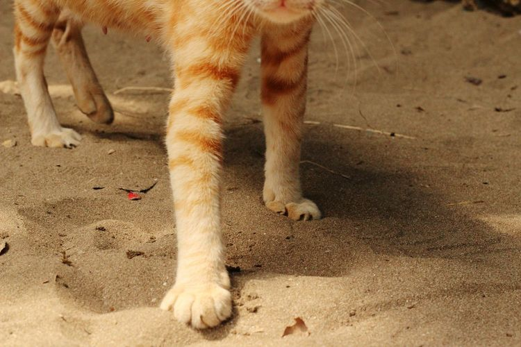 Low section of cat on sand