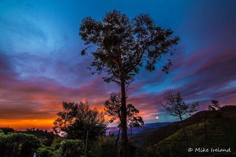 Sunset over Nuwara Eliya, Sri Lanka Tree Sky Sunset Nature Beauty In Nature Scenics Growth Tranquility Cloud - Sky No People Outdoors Tranquil Scene Silhouette Day Sri Lanka EyeEmNewHere