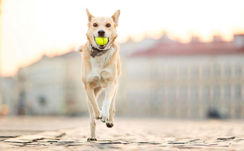 Portrait of a dog running