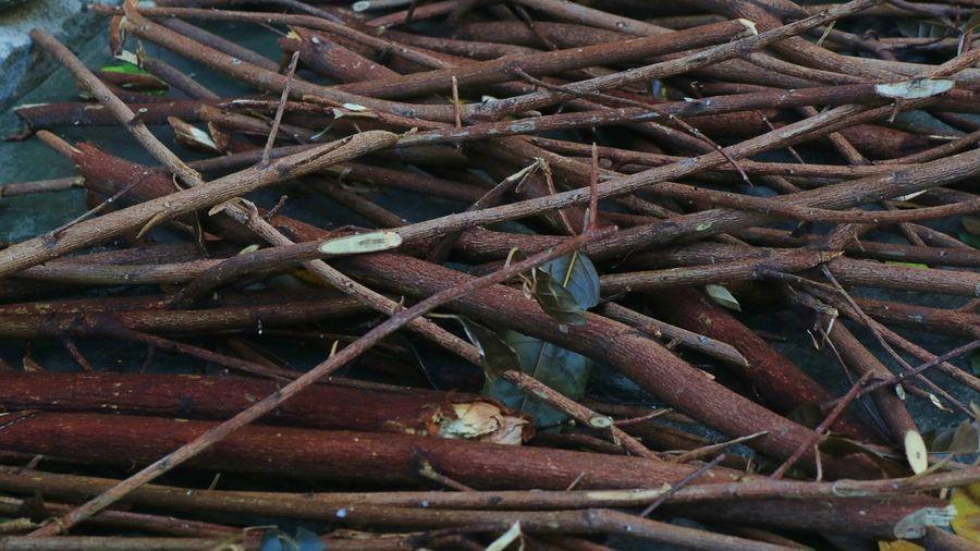 Full frame shot of dried plant